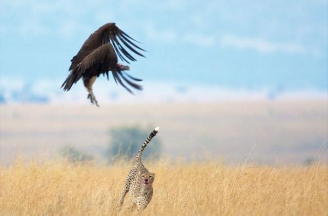 Safari Ruaha 11 - 12 denní