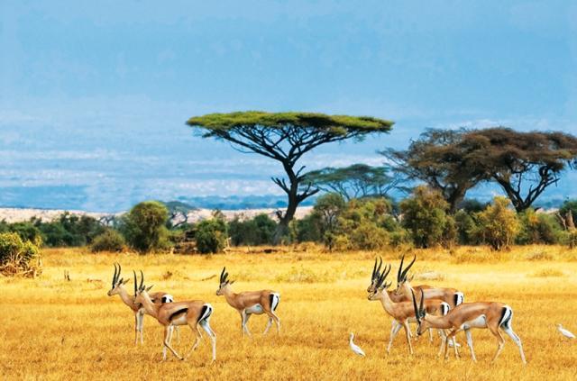 Safari - po stopách antilop