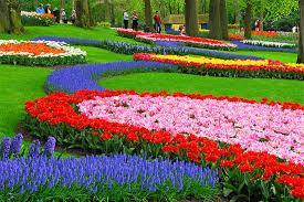 Holandsko: květinové korzo