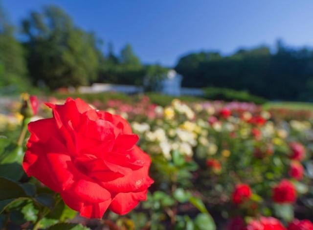 Po stopách Habsburků na zámek Laxenburg s plavbou po největším podzemním jezeře Evropy a návštěvou města růží