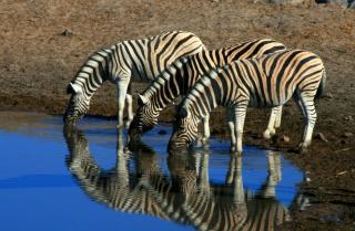 To nejlepší z Namibie - Komfortněji
