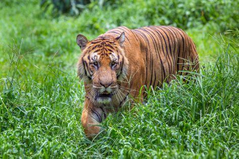 Bangladéš - (nejen) pro fotografy