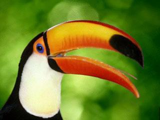 Okruh Ekvádorem