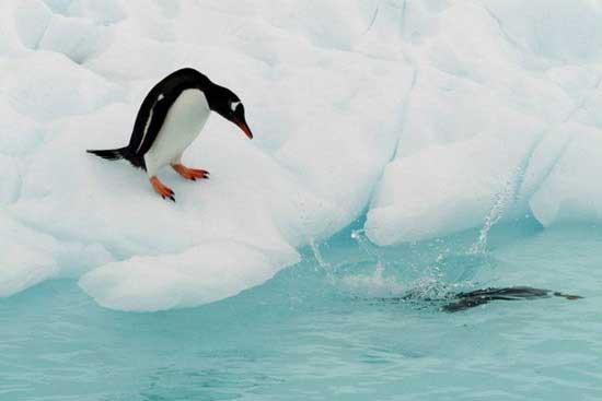 Antarktida letecky
