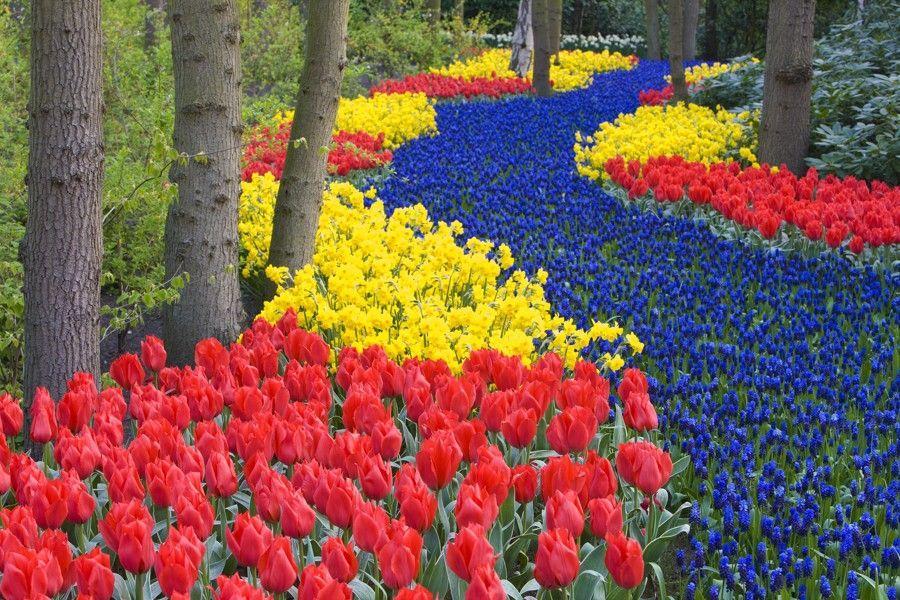 Holandsko, květinové korzo