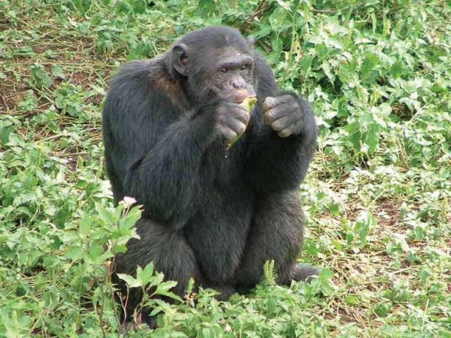 Masai Mara Safari a horské gorily v Ugandě