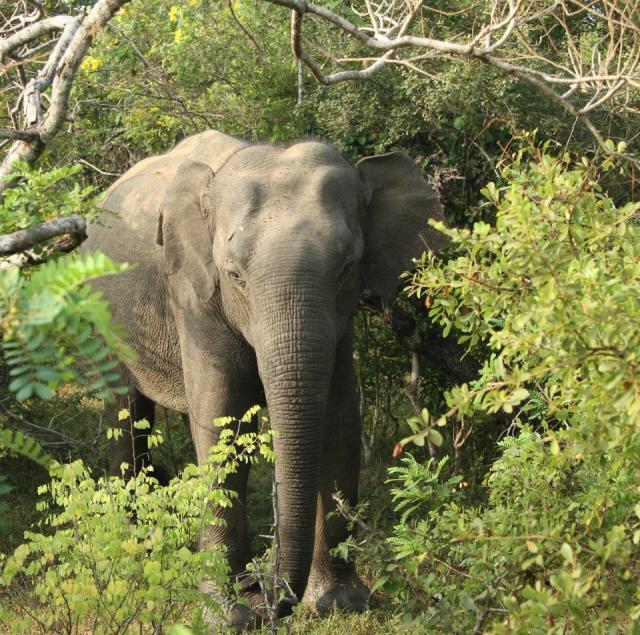 Safari a kultura na Srí Lance