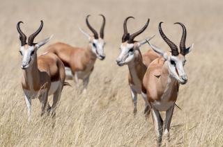 Objevování Namibie s návštěvou jižní Afriky