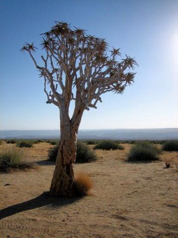 Adventure Safari a kultura v Namibii a Botswaně a Viktoriiny vodopády – 23 dní
