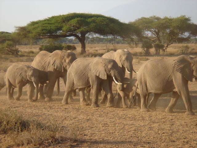 Safari - fascinující národní parky Keni a Tanzanie