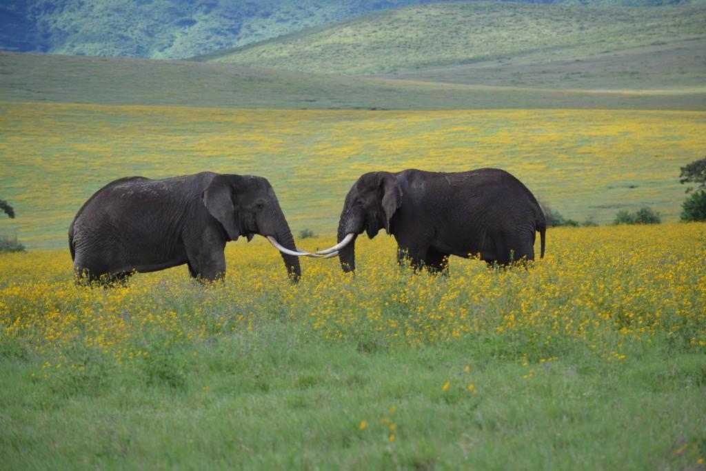 Safari - nejkrásnější národní parky Tanzánie
