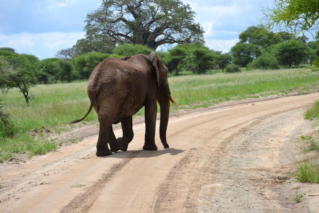 Safari v jižní Tanzánii