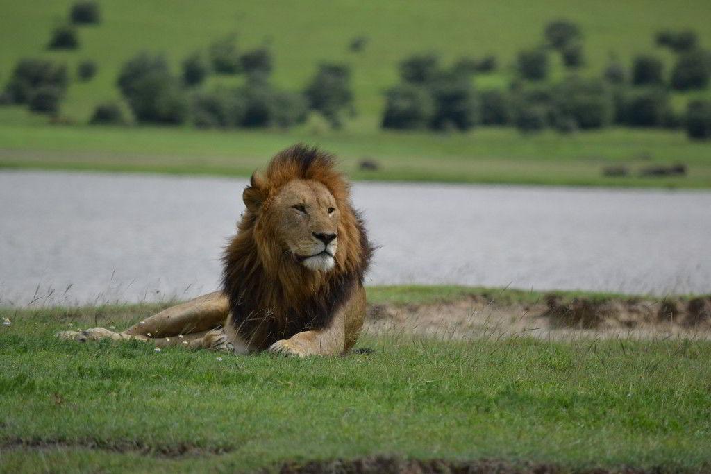 Safari v Krugerově NP