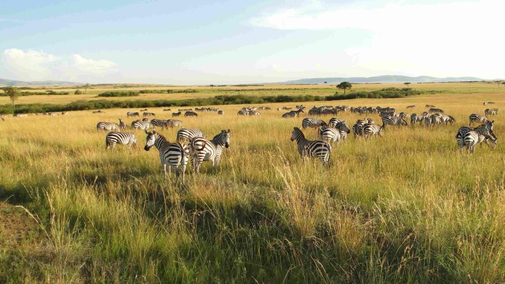 Camping Amboseli a Tsavo safari
