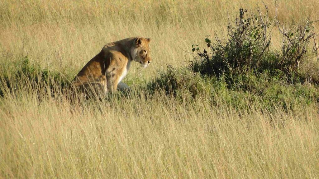 Amboseli, jezero Naivasha a Masai Mara Safari