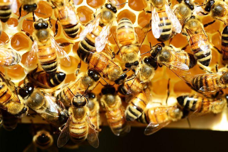 Včelařství na Balkáně