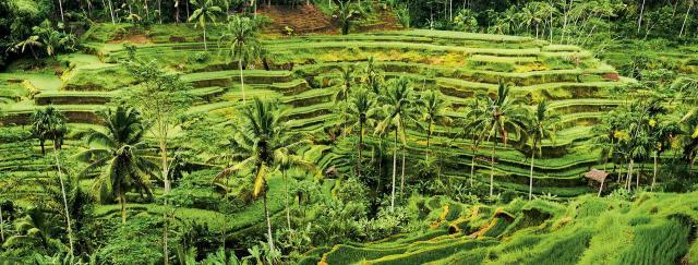 Bali - ostrov bohů (přímý let)