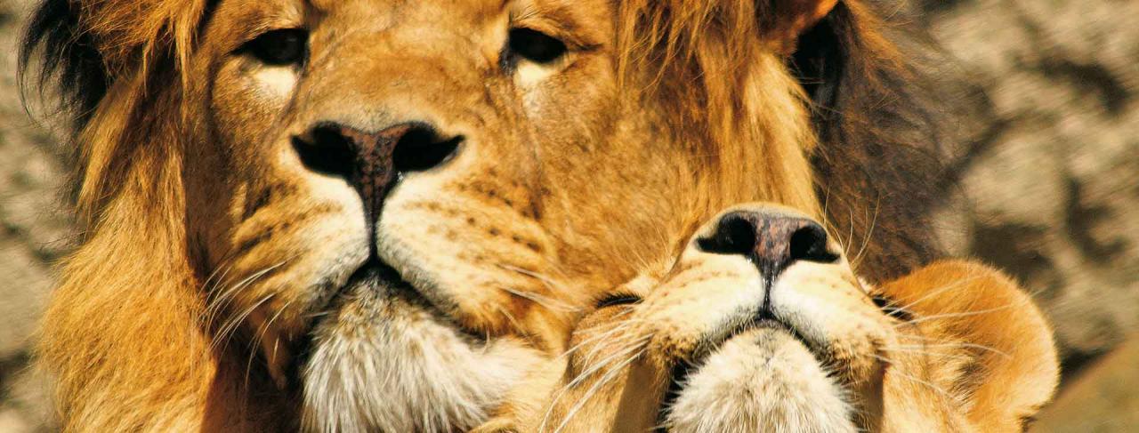 Dvojité safari