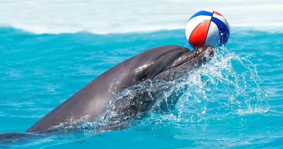 Zájezd do delfinária a ZOO v Norimberku