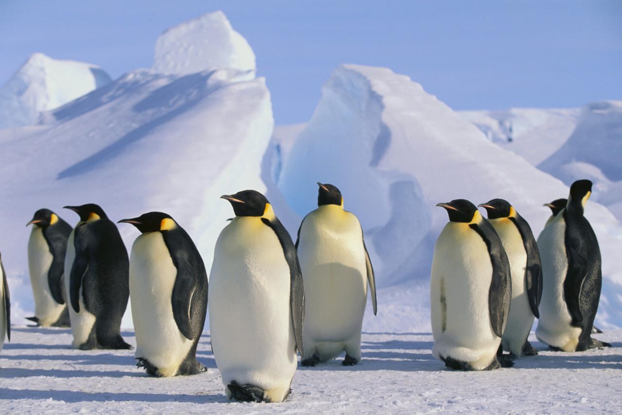 Antarktida (Komfort)