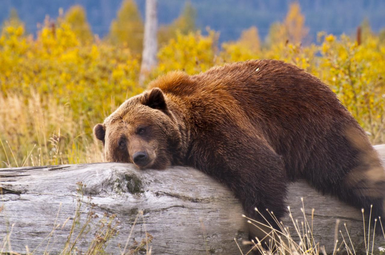 Yukon, Aljaška - volaní divočiny (Komfort)
