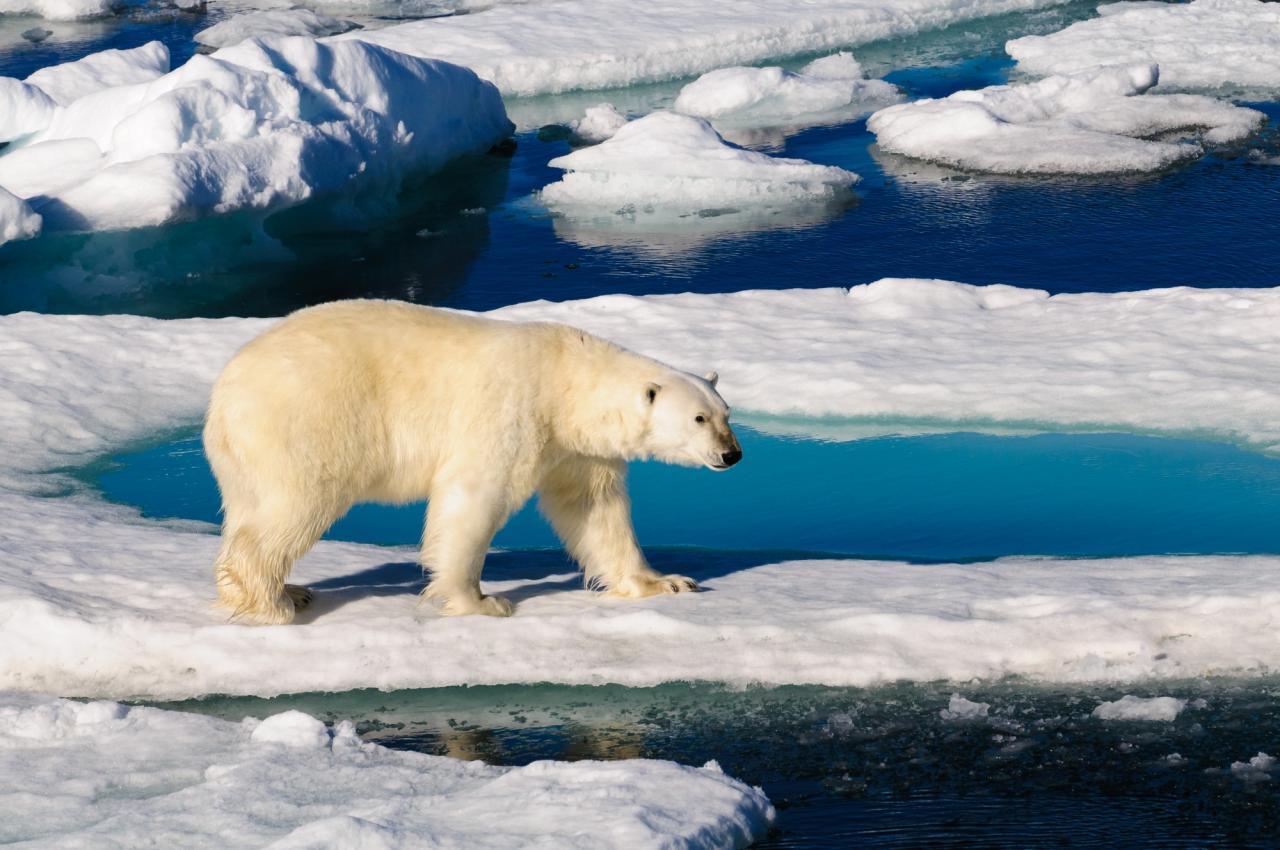 Na severní pól s Lubošem Fellnerem (Komfort)