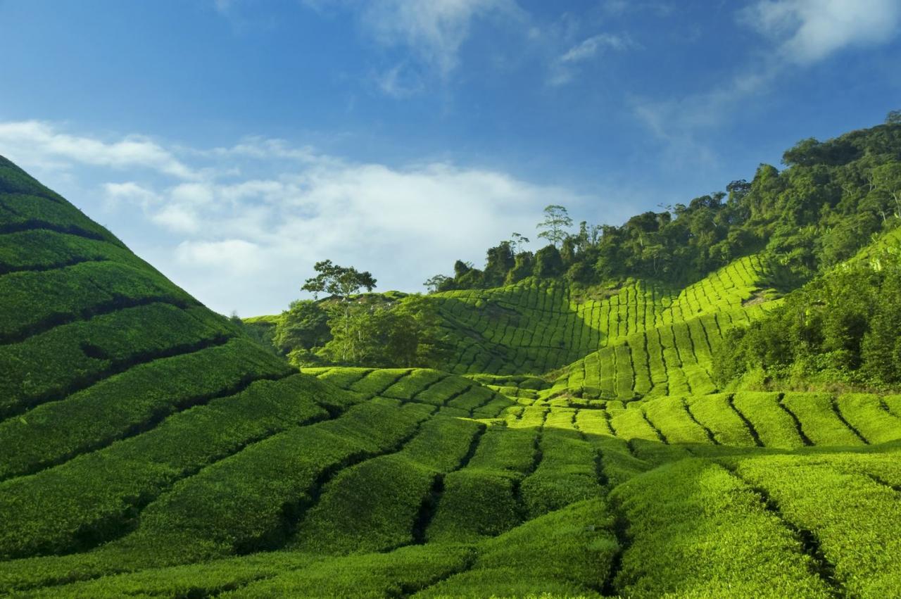 Malajsie – poznávací zájezd zaměřený na sever