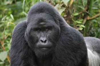 Za primáty a pohnutou historií do Rwandy