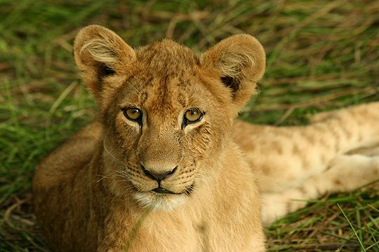 Dobrodružné safari v Botswaně