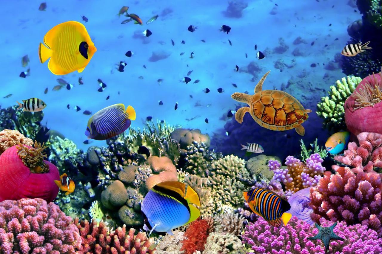 Potápění na Fiji