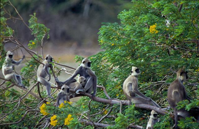 Neznámá Srí Lanka