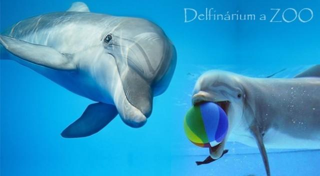 Delfinárium a ZOO Norimberk