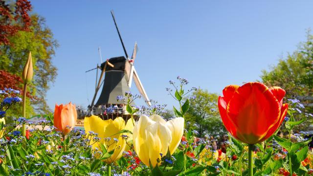 Holandsko Keukenhof,Zaanse Schans, Volendam a Amsterdam