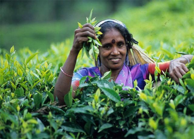 Krásy jižní Srí Lanky s nakouknutím do území hor