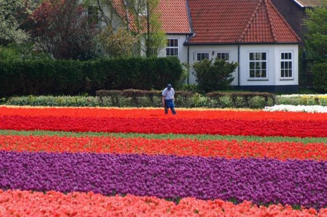 Belgie, Holandsko