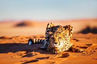 To nejlepší z Namibie