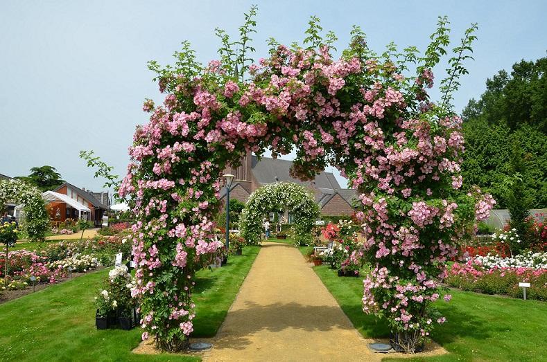 Růže v romantických zahradách s profesionálním zahradníkem