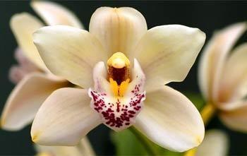 Výstava orchidejí ve Vídni