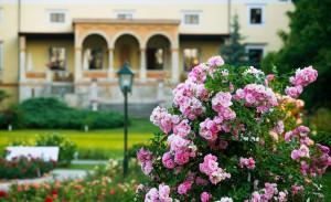 Výstava růží v klášteře Klosterneuburg