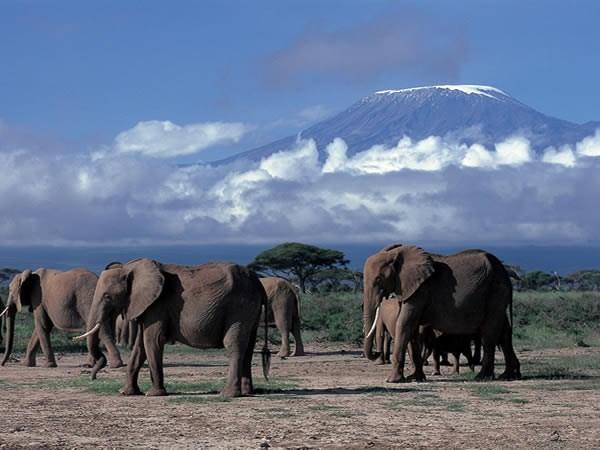 Luxusní Safari - zlatá klasika Tanzánie