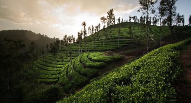 Luxusní Indie - velká okružní cesta jižní Indií