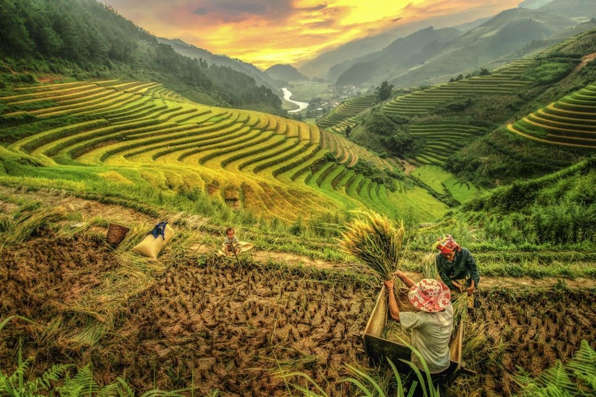 Vietnam datovania agentúra